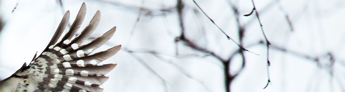 Итоги февраля - Блог Лешего